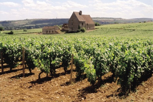 Vines at Domaine Olivier Leflaive