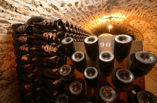 Bottles fermenting in Salon's cellar
