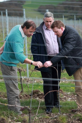 Harry Goring inspects the vines with Dermot