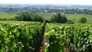 burgundy-july-2011-174