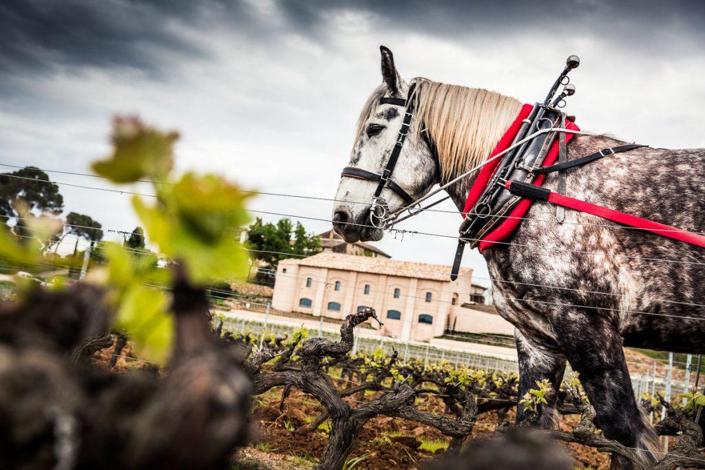 horse at chateau la tour de l eveque