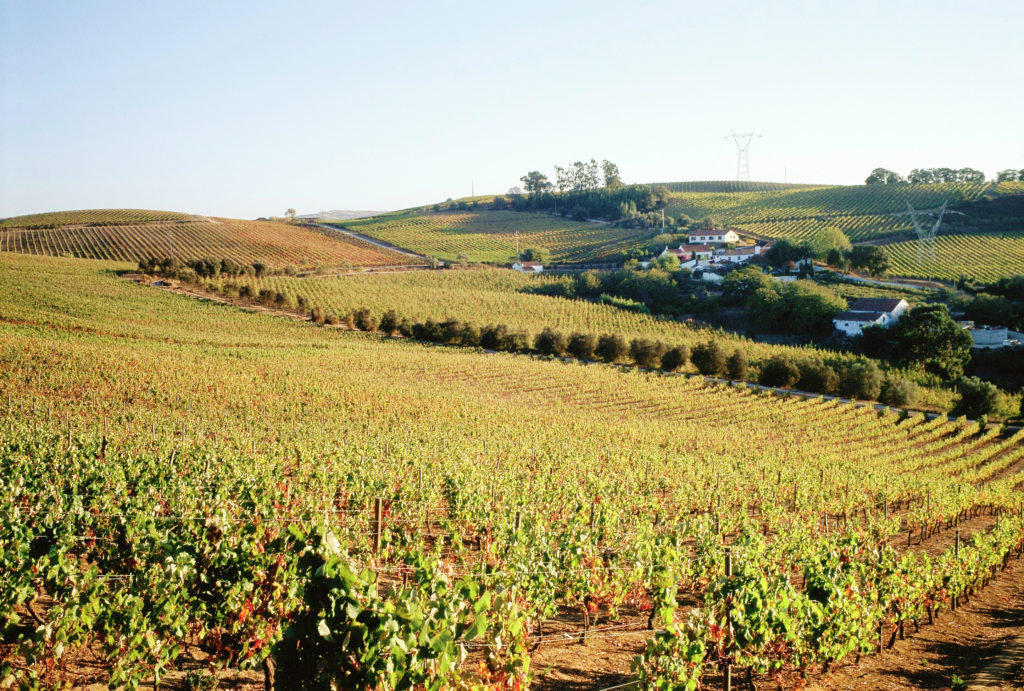 The vineyards at Quinta de Chocapalha