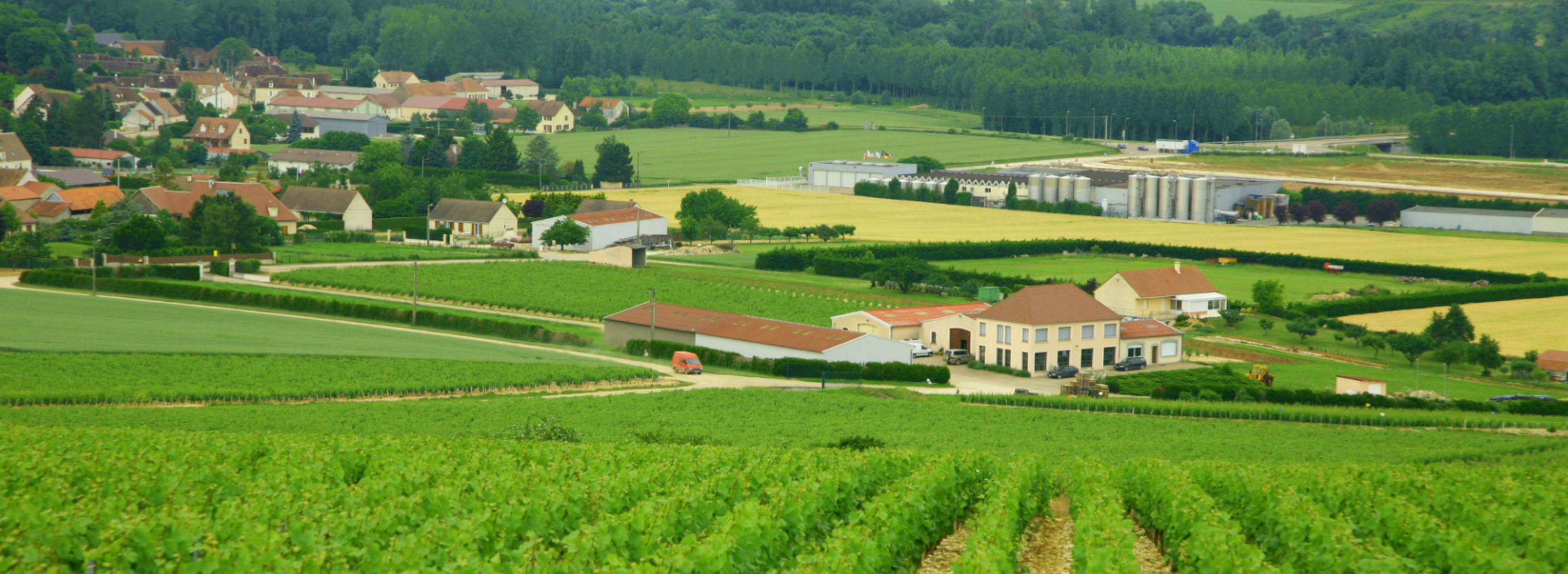 An interview with Vincent Dampt, Domaine Vincent Dampt