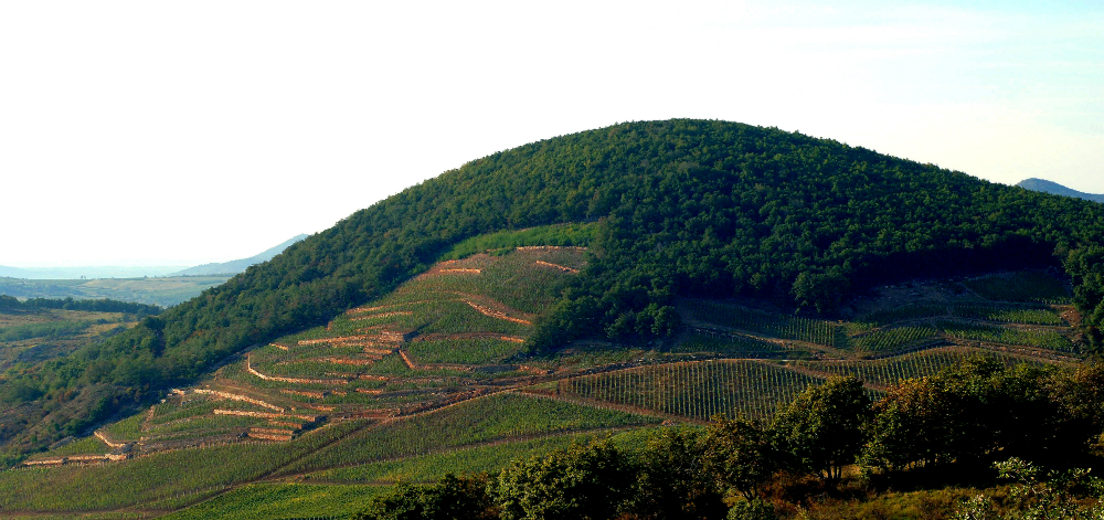Barta Winery