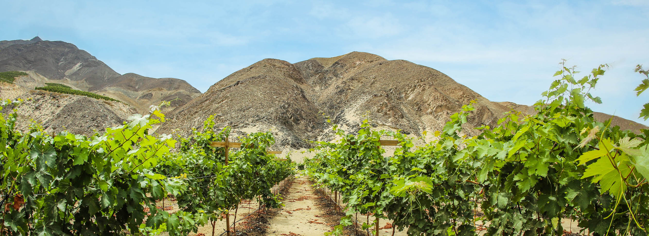 It's About Time You Tried Peruvian Wine